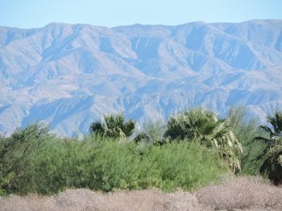 ca desert westin 003